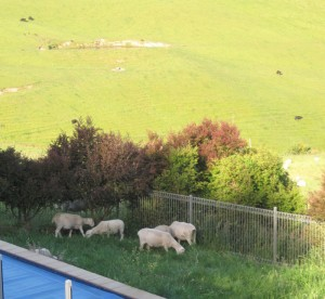 Lovely Lawnmowers